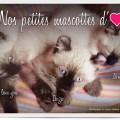 Restaurant Le Saint-Hubert de Briare - Nos petites mascottes - Trois petits chatons adorables