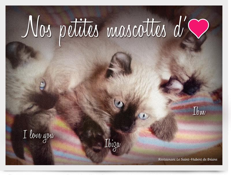 Restaurant Le Saint-Hubert de Briare - Nos petites mascottes - Trois petits chatons adorables - Lol Cat